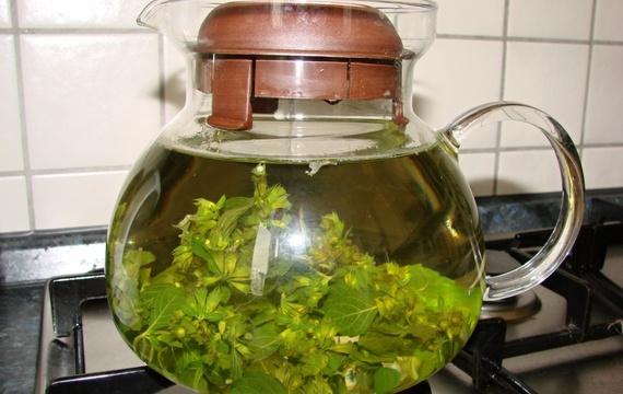 Meduňkový čaj z čerstvé meduňky