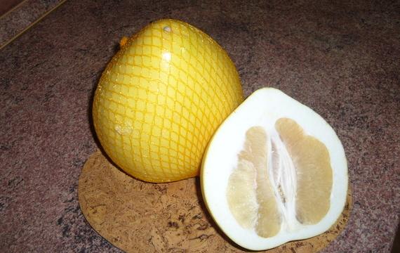 Pomelo - obr mezi citrusy