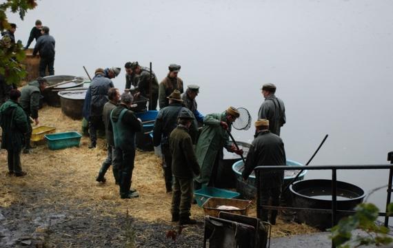 Výlov rybníka v Černé Vodě obrazem