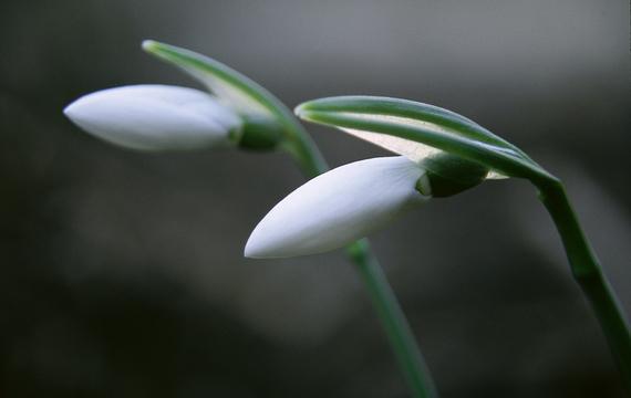 Jarní únava - jak ji překonat?