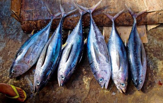 Tuňákové delikatesy