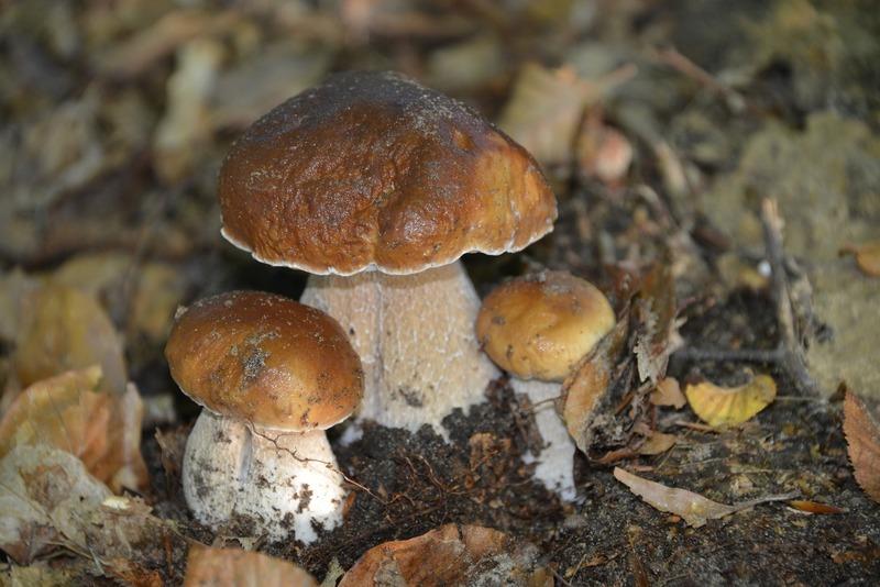 Rychlá houbová polévka