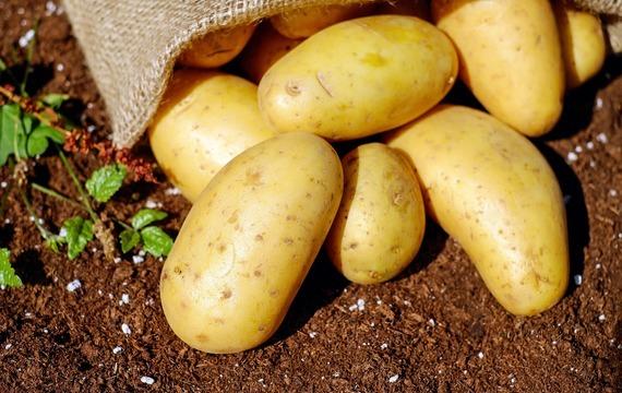 Gratinované brambory se sýrem