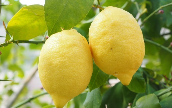 Grilováné citrony s vanilkovou zmrzlinou