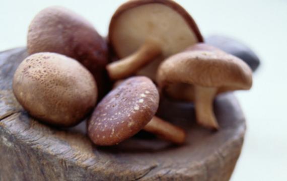 Čínské houby