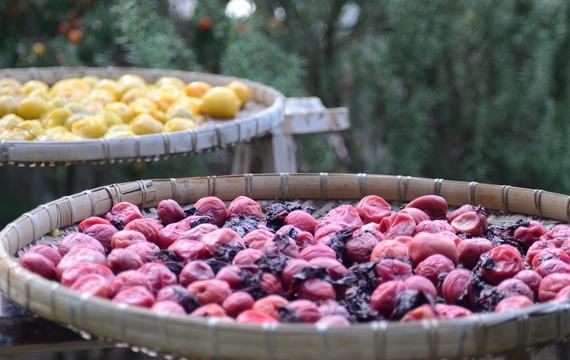 Sušené ovoce: Máte nadbytek ovoce? Připravili jsme si pro vás návod na to, jak ho rychle a jednoduše zpracovat!