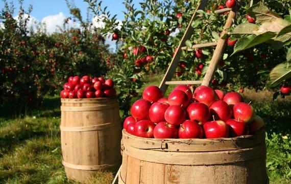 Hledáte čerstvé potraviny? Víme, na kterých si pochutnáte vprůběhu srpna!