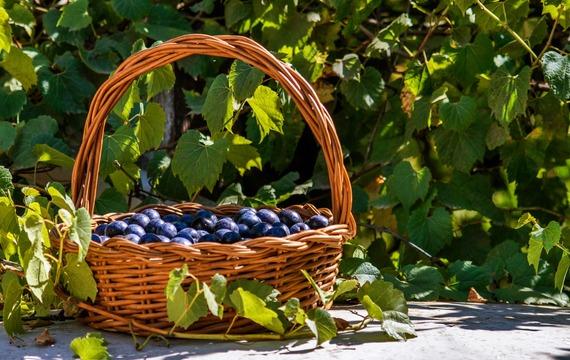5 potravin typických pro září